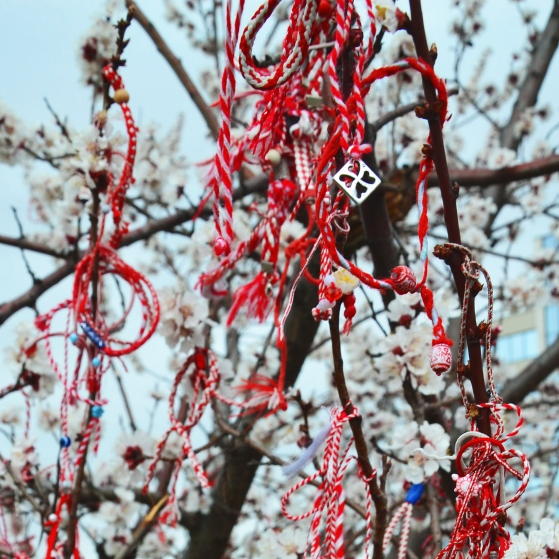 Martenitsas hanging on a blossoming tree, a symbol of approaching spring.