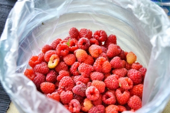 Raspberries just picked up from the garden.