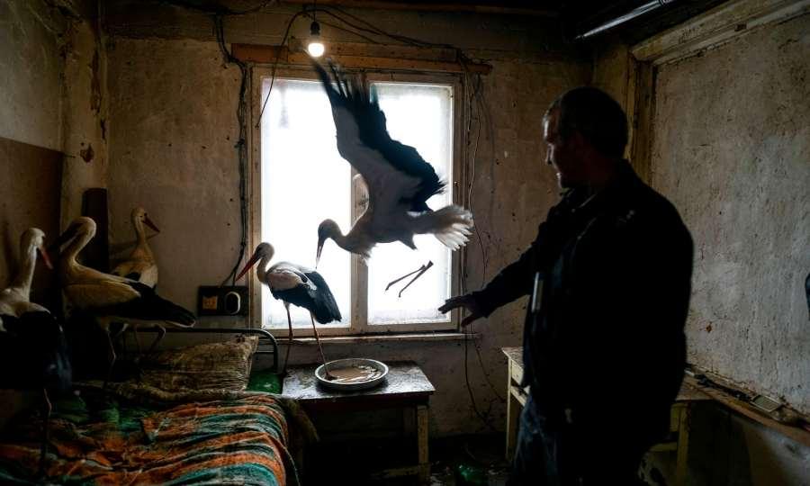 Bulgaria_storks